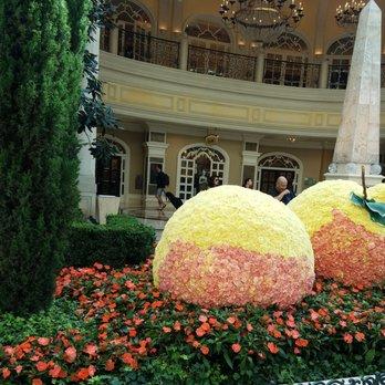Conservatory U0026 Botanical Garden   5264 Photos U0026 539 Reviews   Botanical  Gardens   3600 S Las Vegas Blvd, The Strip, Las Vegas, NV   Phone Number    Yelp