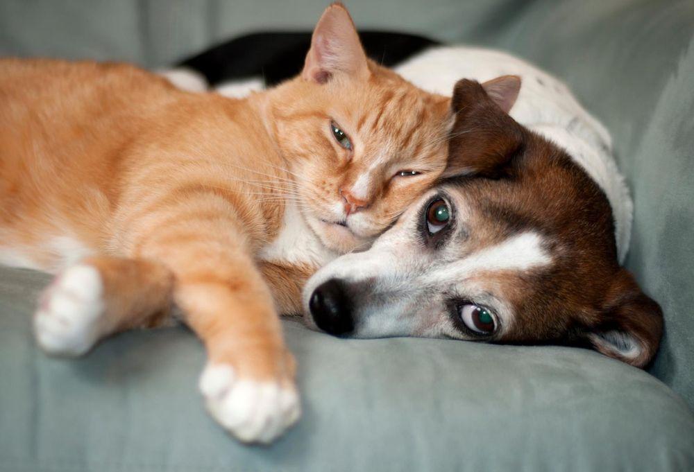 Evansville Pet Sitters: 5904 Berry Ln, Evansville, IN