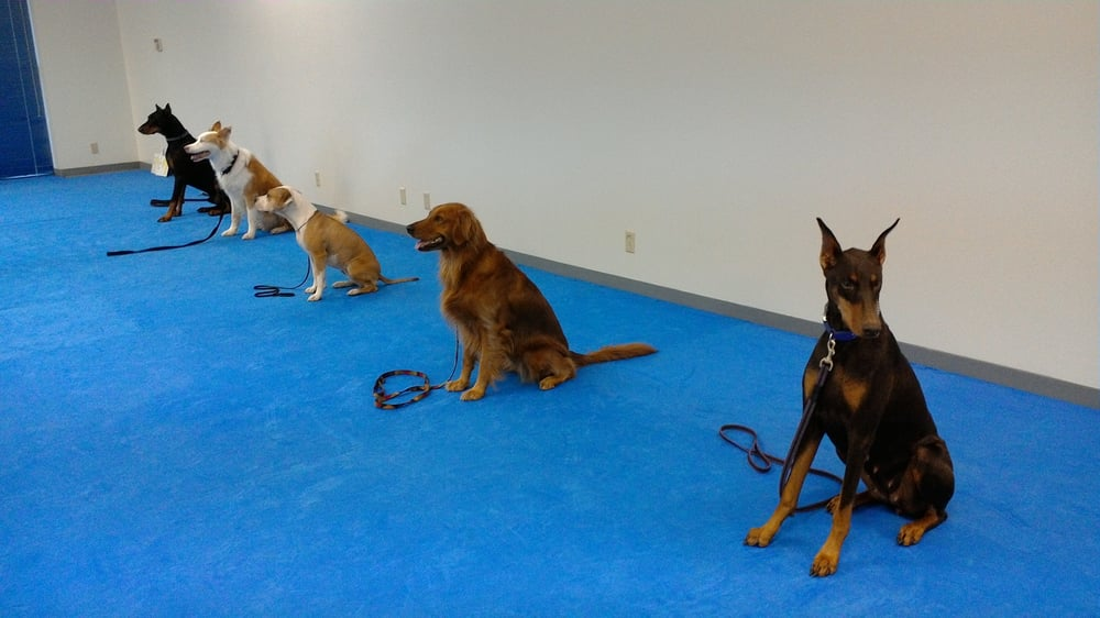 Dog Training Se Portland