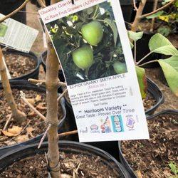 Photo Of Shamus O Leary S Tropical Fruit Trees Phoenix Az United States