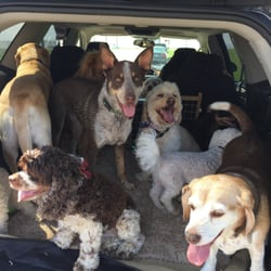 Peppy Paws Dog Walking Request A Quote Dog Walkers