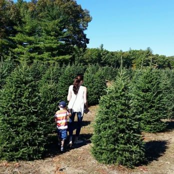 Henry's Christmas Tree Farm - 30 Photos & 18 Reviews - Christmas ...