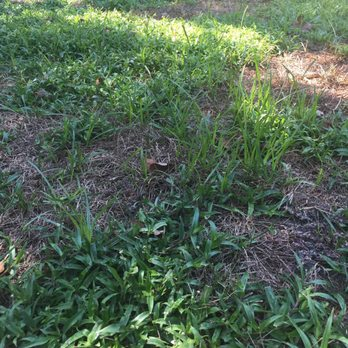 Photo Of TruGreen Lawn Care   Morrisville, NC, United States. You Can See