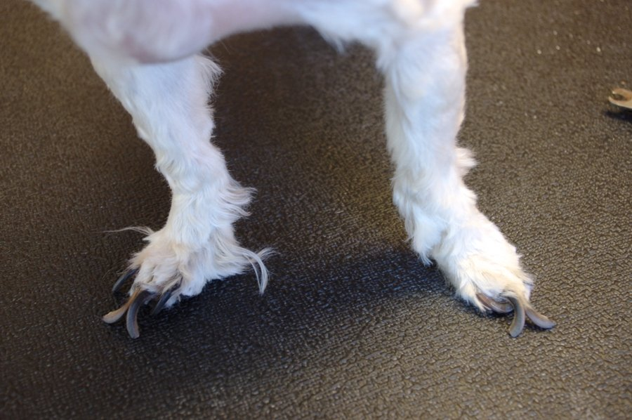 before and after nail trim, demonstrates how long nails can affect ...