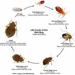 Arizona Bed Bug Companies