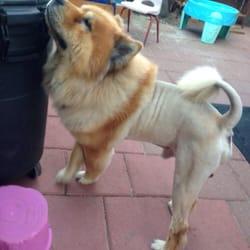 Pawsitively perfect mobile pet spa peluquer a de for A perfect pet salon