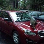 Maita Subaru - 31 Photos & 213 Reviews - Car Dealers - 2912 Auburn