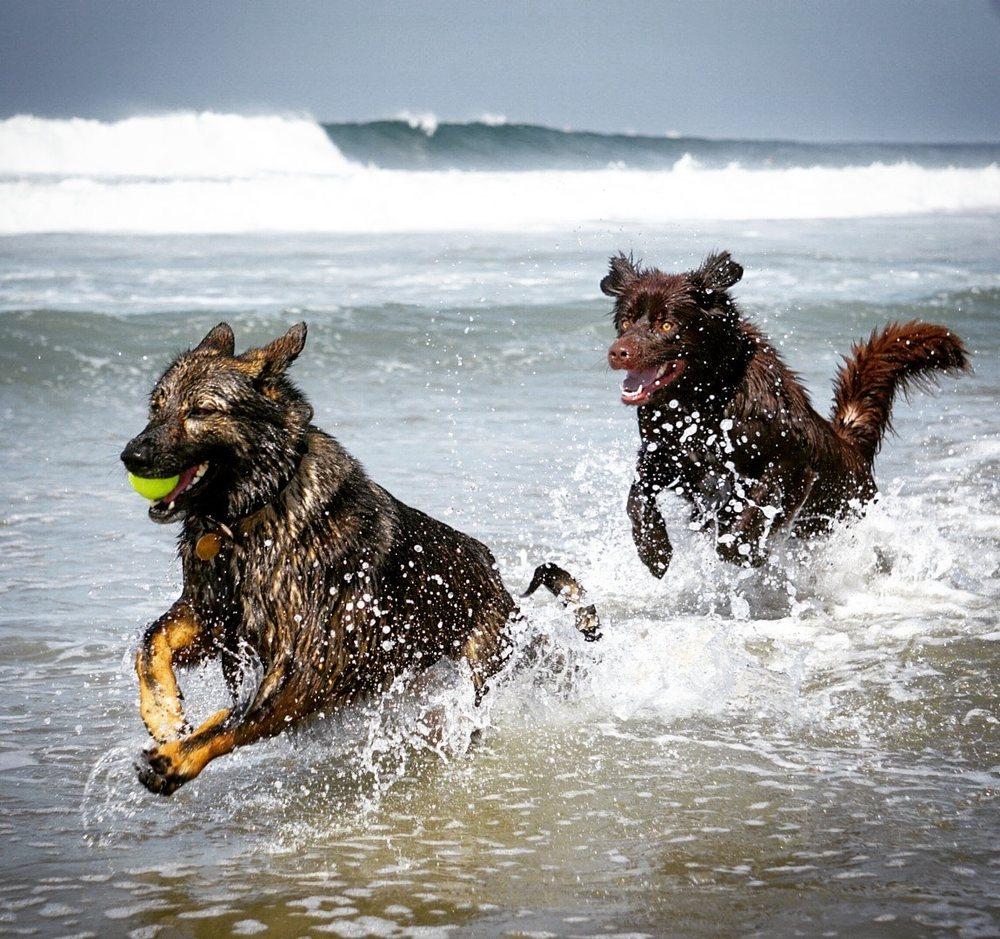 Dog Beach USA