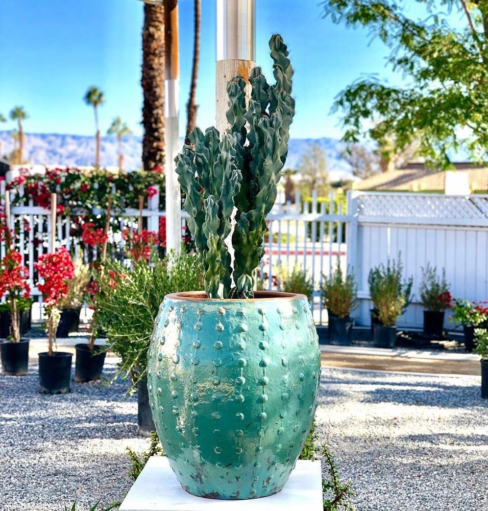 Palo Verde Gardens