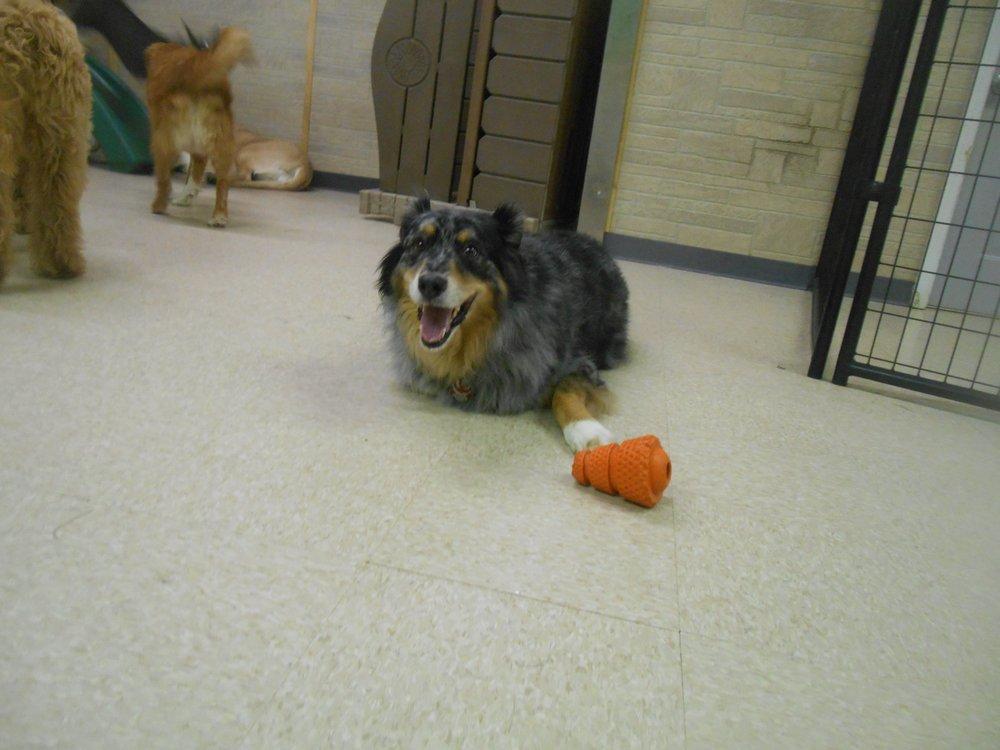 The Dog House Resort & Spa: 32 E Lakewood Blvd, Holland, MI