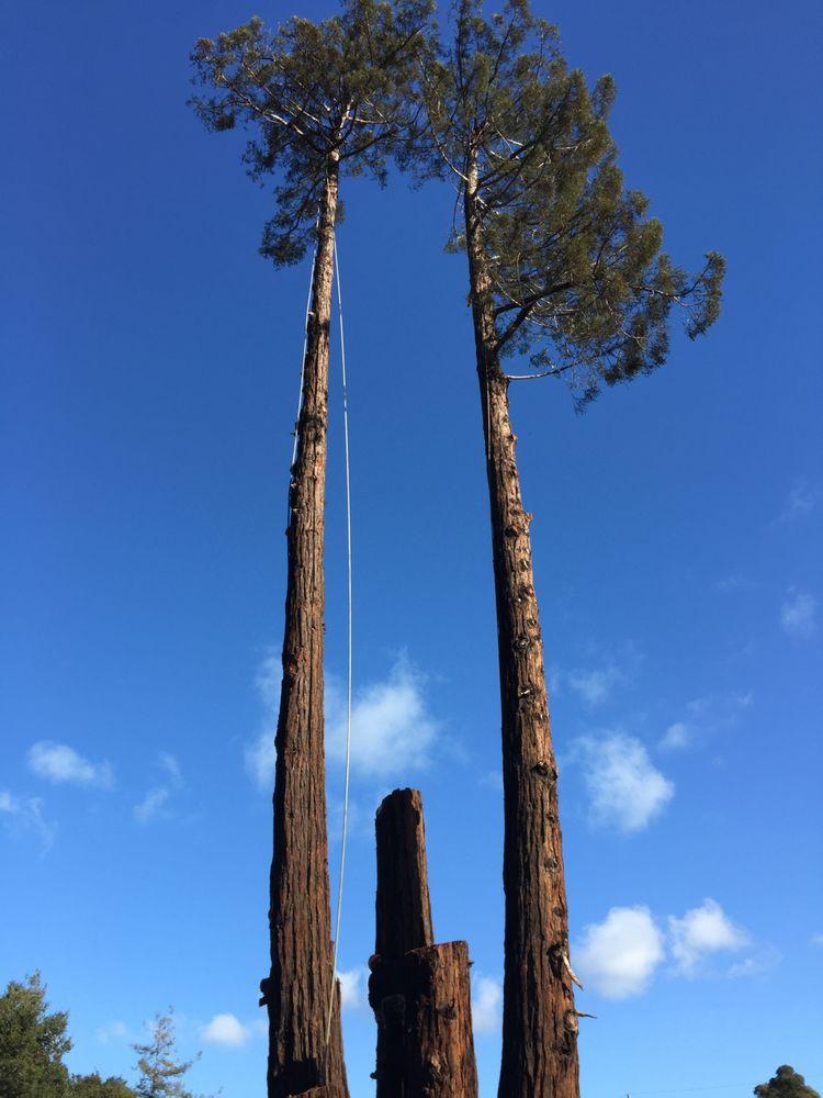 EC Builders/Tree Service