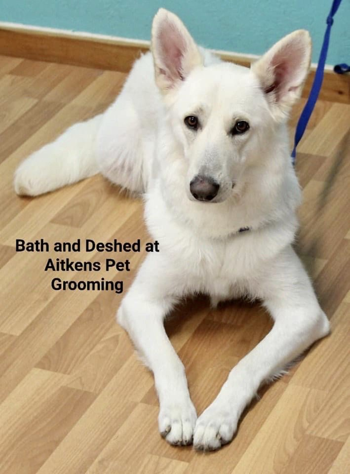 Aitkens Pet Grooming: 6087 Front St, Georgetown, CA
