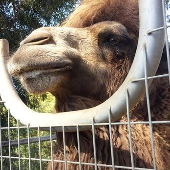 Too Many Zoos  Tour