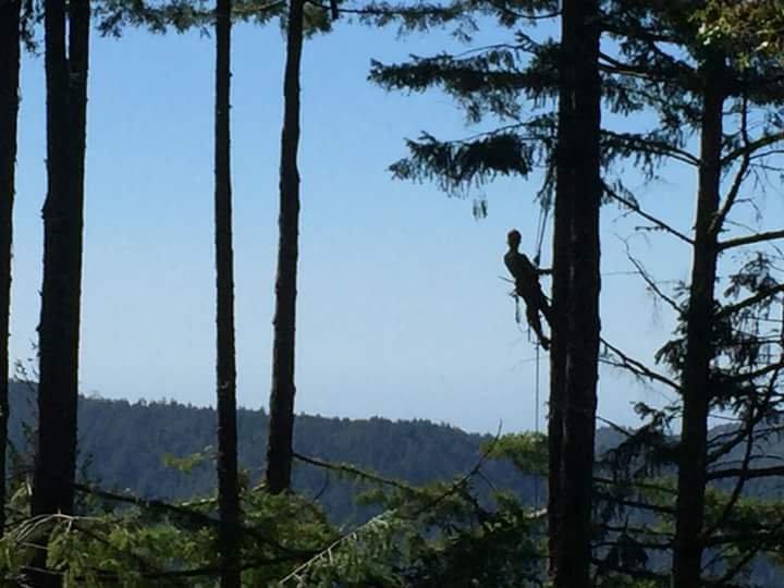 Dustin Keller, Arborist: Davenport, CA