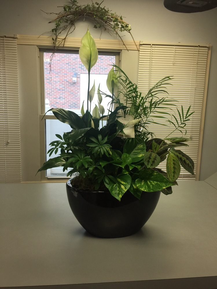 Nanz & Kraft Florists: 4450 Dixie Hwy, Louisville, KY