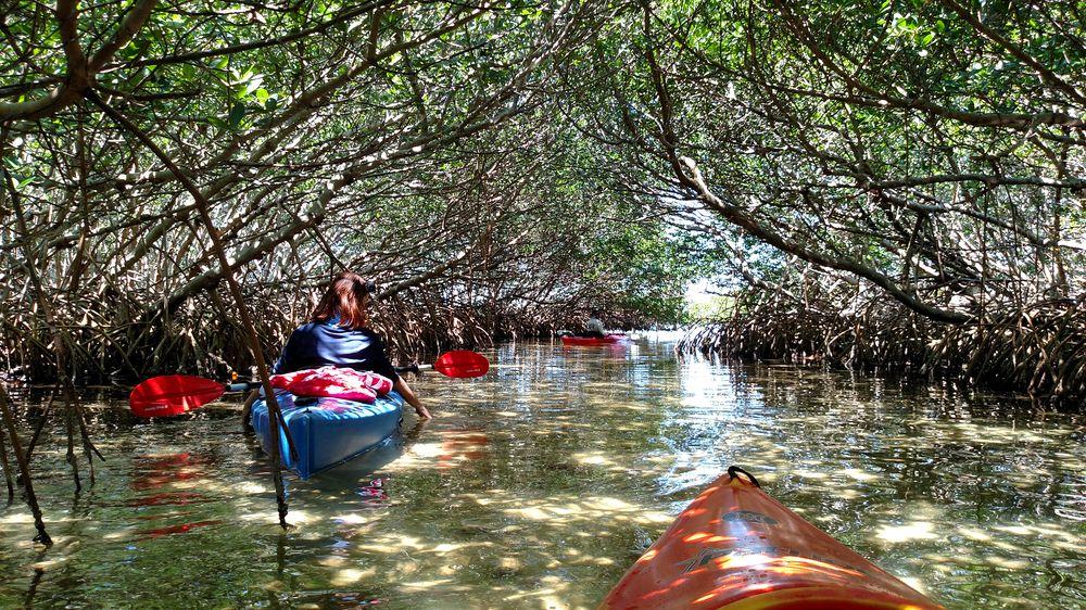 Island Kayak Tours: 2800 Pinellas Bayway S, Tierra Verde, FL