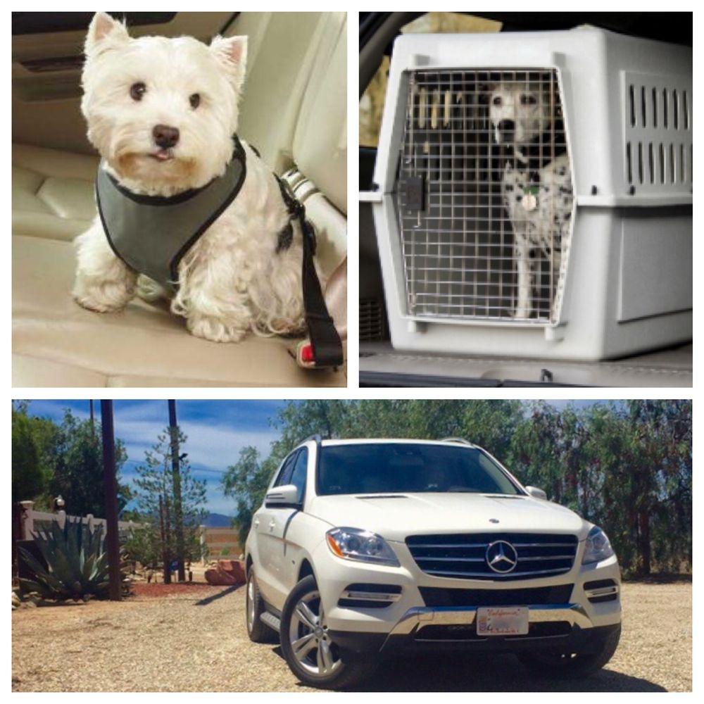 Alpha Pet Dog Lodging & Training Resort: 3632 Smith Ave, Acton, CA