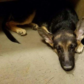 Dog Cough Bark Lethargic