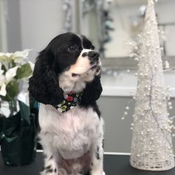 Ooh La La Posh Pets Grooming & Boutique - 107 Photos & 10