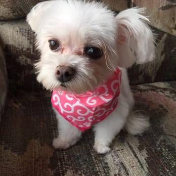 Dog Salon Kahala - (New) 56 Photos & 43 Reviews - Pet