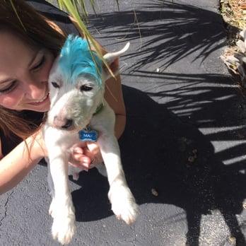 Dog Grooming Naples Fl