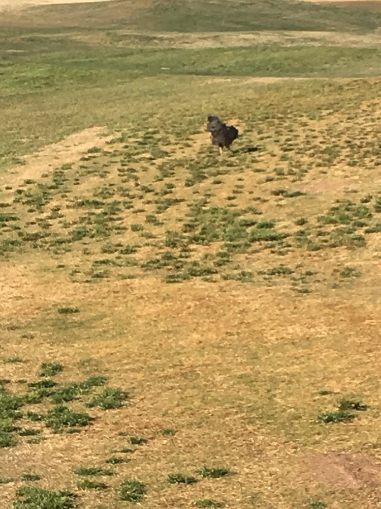 Golf Club at Oasis