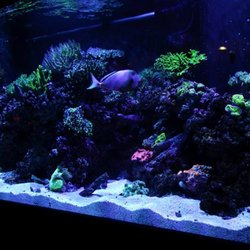 Photo Of Ocean S Floor Greenville Sc United States Our Little Piece