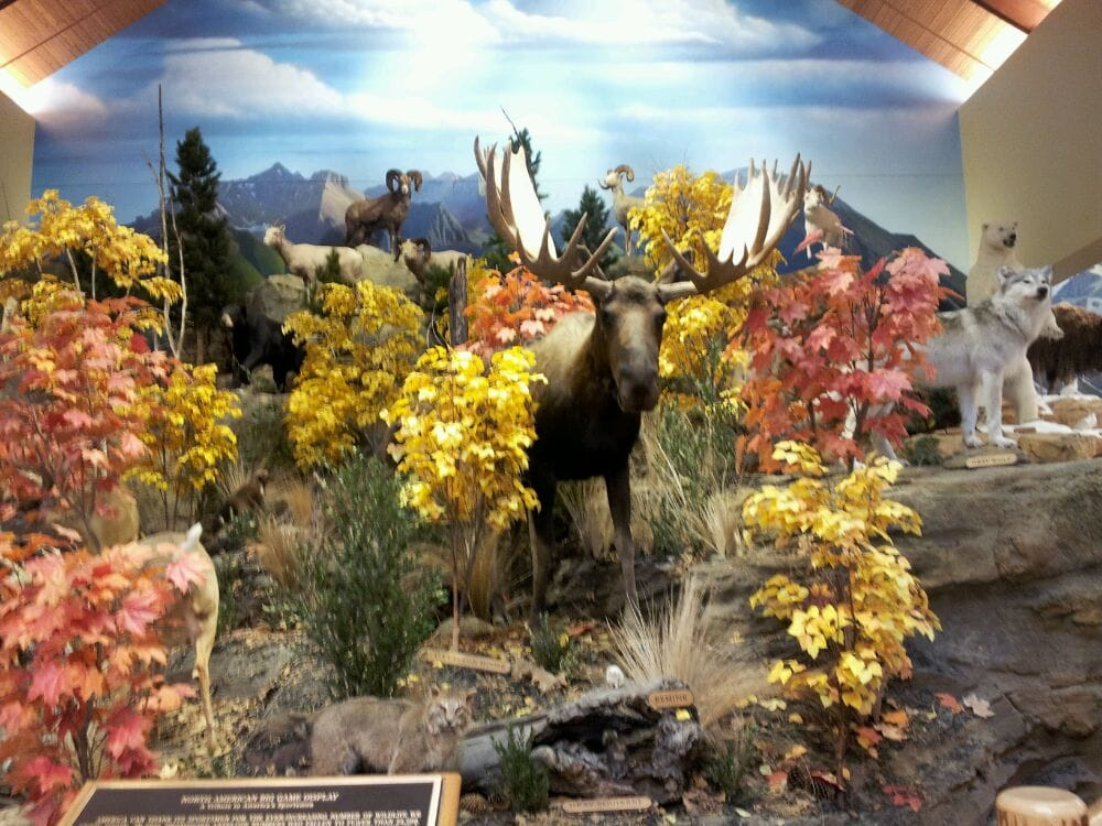 Cabela's: 2427 N Greenwich Rd, Wichita, KS