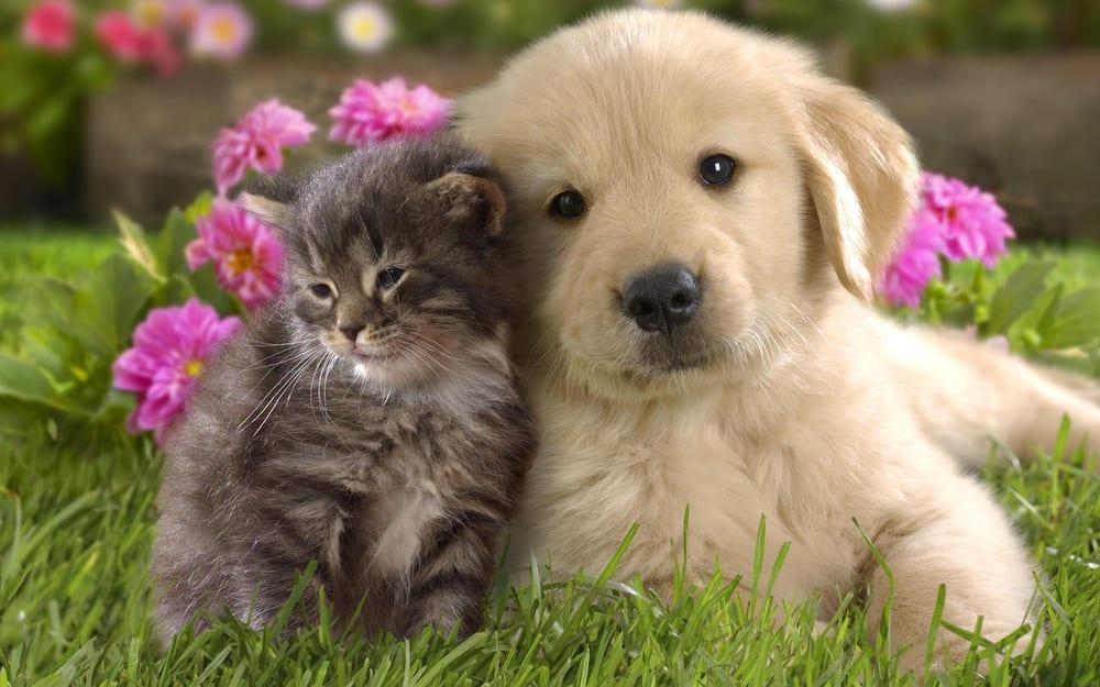 Madison Pet Clinic: 817 S Madison Blvd, Bartlesville, OK