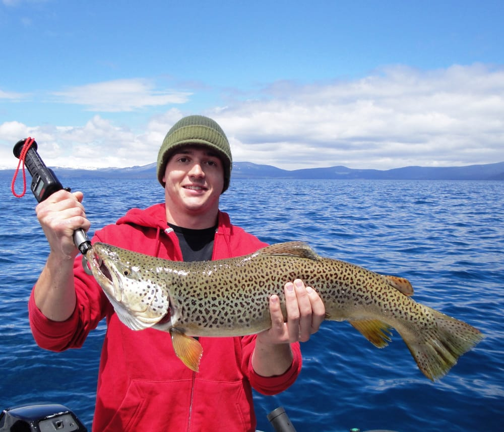 Monster lake tahoe brown trout yelp for South lake tahoe fishing charters