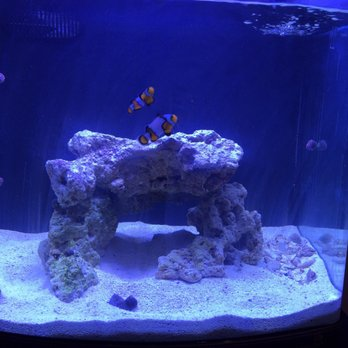 discount aquarium fish and reef 11 reviews aquarium