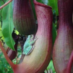 Photo Of Gardeneru0027s Supply Company   Burlington, VT, United States.  Greenhouse Critters