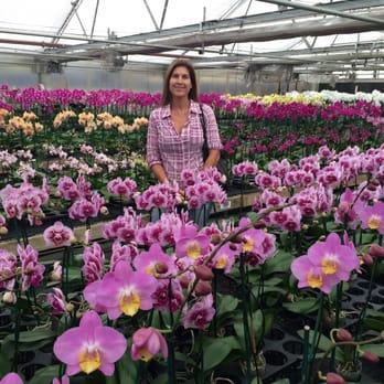Orchid Nurseries Thenurseries