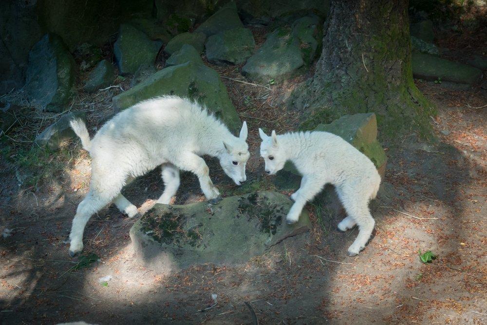 Oregon Zoo: 4001 SW Canyon Rd, Portland, OR
