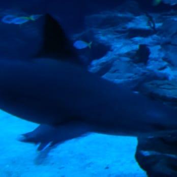 Photo de Aquarium Mare Nostrum - Montpellier, France