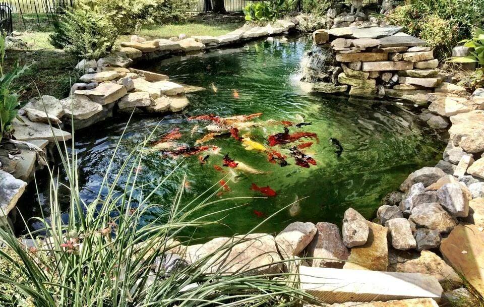 Freshly cleaned koi pond yelp for Koi ponds near me