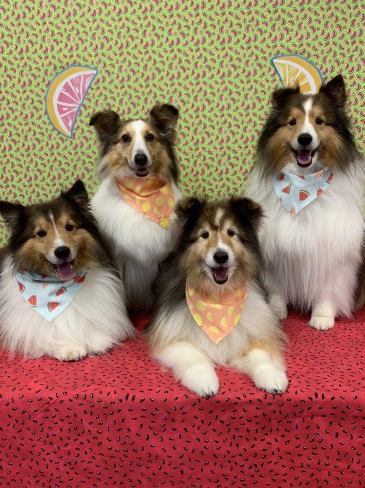 Gemini Dogs