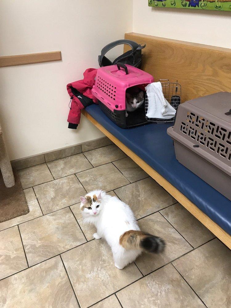 Androscoggin Animal Hospital: 457 Foreside Rd, Topsham, ME