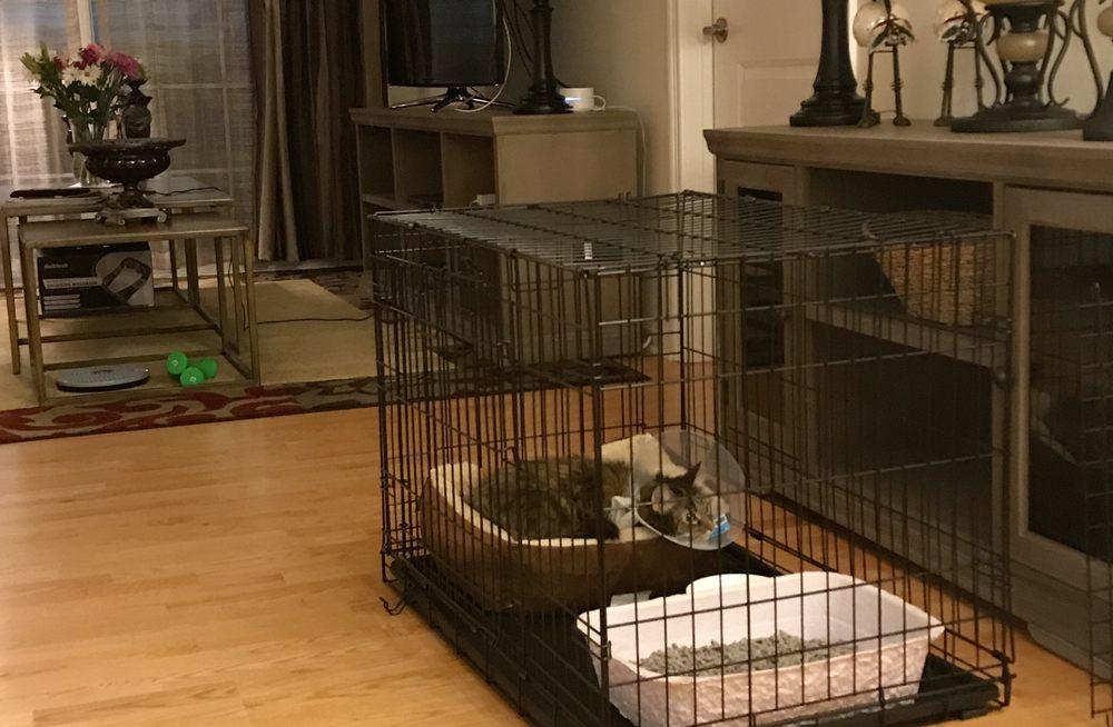 BluePearl Pet Hospital: 56 Roland St, Boston, MA
