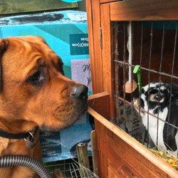 Papi Paws 15 Photos Dog Walkers Brownhills West Midlands