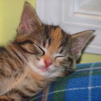 Annex Cat Rescue Toronto On