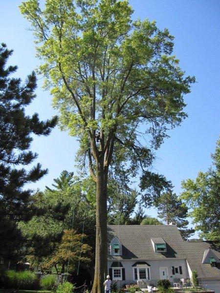 Lincoln Tree Service: Lincoln, NE