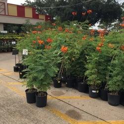 photo of houston garden centers pasadena tx united states - Houston Garden