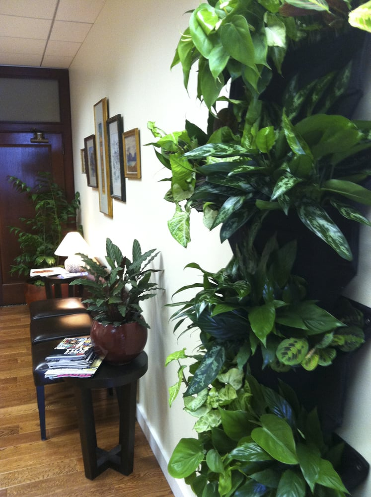 Indoor Plant Wall At The San Francisco Acupuncture Office Yelp