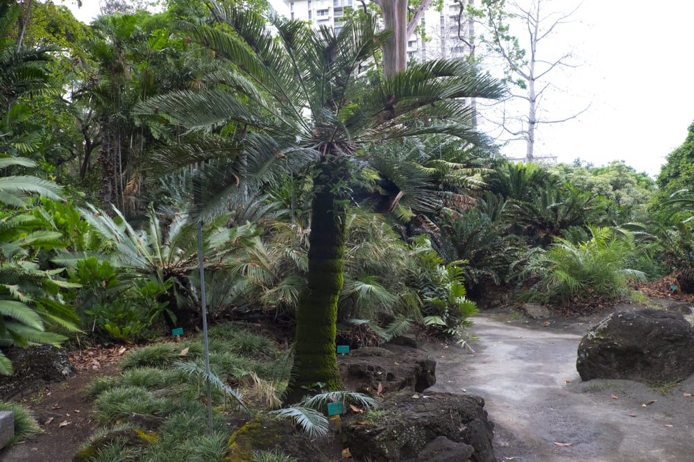The city outside yelp for Foster botanical garden honolulu