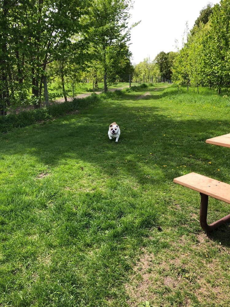 Victoria Dog Park: 7200 Park Dr, Victoria, MN