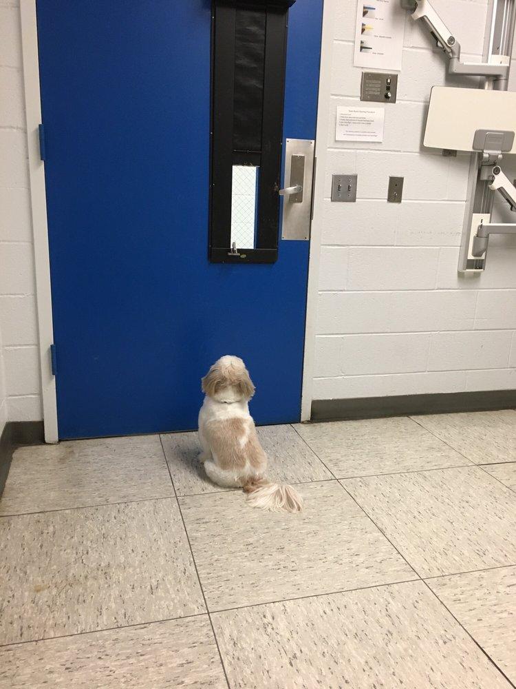 Veterinary Hospital University of Pennsylvania