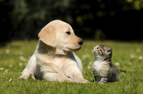 Pleasant Paws Veterinary Care: 1375 S Lebanon St, Lebanon, IN