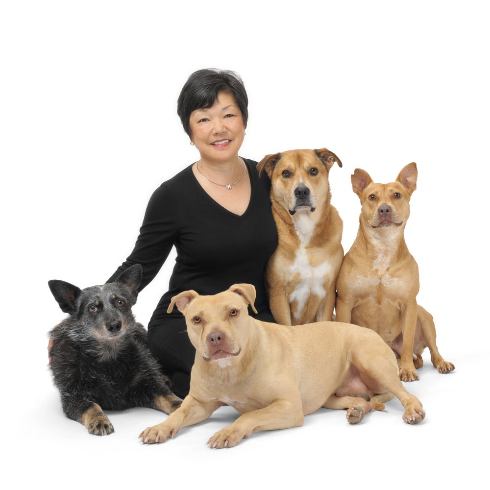 How To Get A Dog Trainer Certification