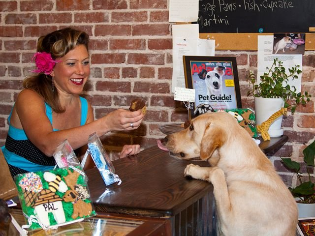 Birthday Cakes For Dogs In Massachusetts ~ Taj ma hound 31 photos & 28 reviews pet stores 707 e lake dr